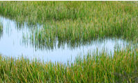 Cleaning up: how artificial reed beds are helping to solve unsavoury sewage side effects  image
