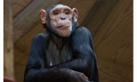 Monkey World goes bananas for Knauf Insulation donation image