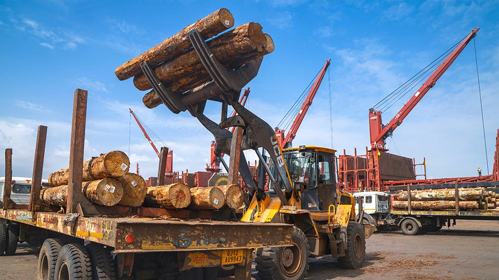 Timber imports show strong market recovery image